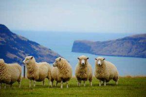 ワーキングホリデー ニュージーランド おすすめ