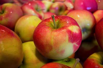 Apple, Yakima