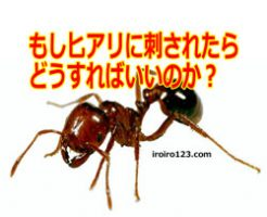 http://iroiro123.com/fire-ant-what-to-do