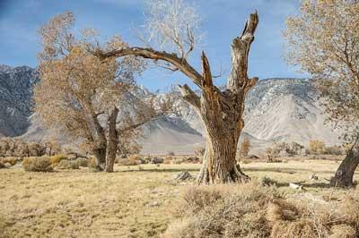乾燥 カリフォルニア 枯れ木