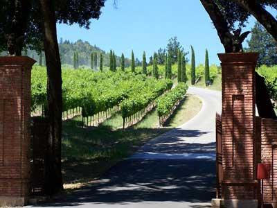 ナパ ワイン ぶどう畑