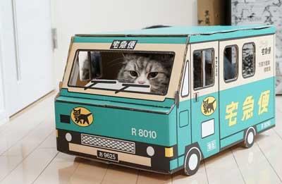 猫, 宅配